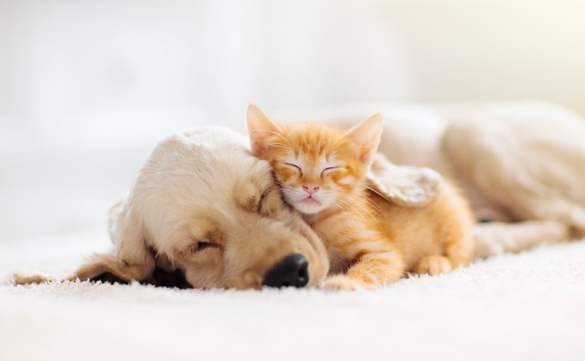 The Positive Impact of Pets on Mental Health