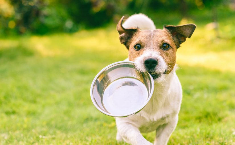 The Hidden Danger of Dog Treats