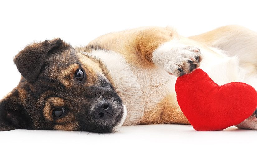 The Best Valentine's Day Gifts for Pet Lovers