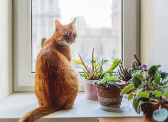 16 Toxic and Non-Toxic Plants for Households with Pets
