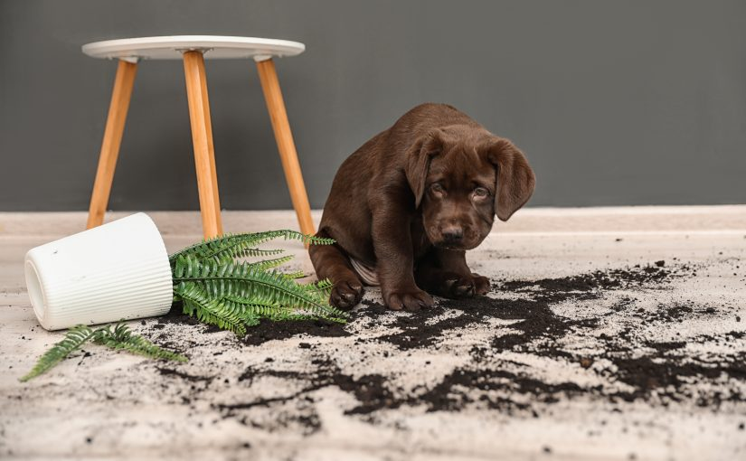 How to Keep your Home Clean with Indoor Pets